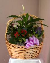 Blooming Basket LBB-1